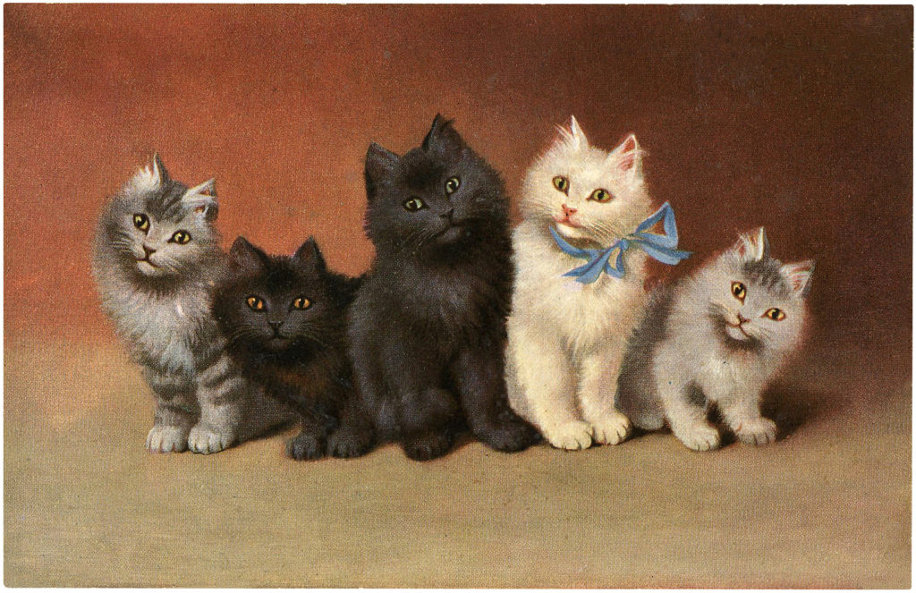 Cat Family Image