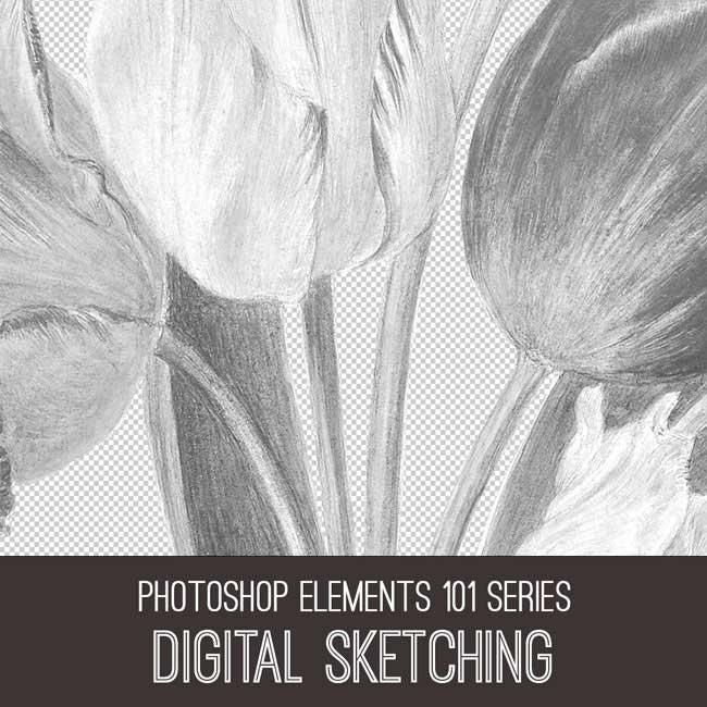 Photoshop Elements 101 Series Digital Sketching