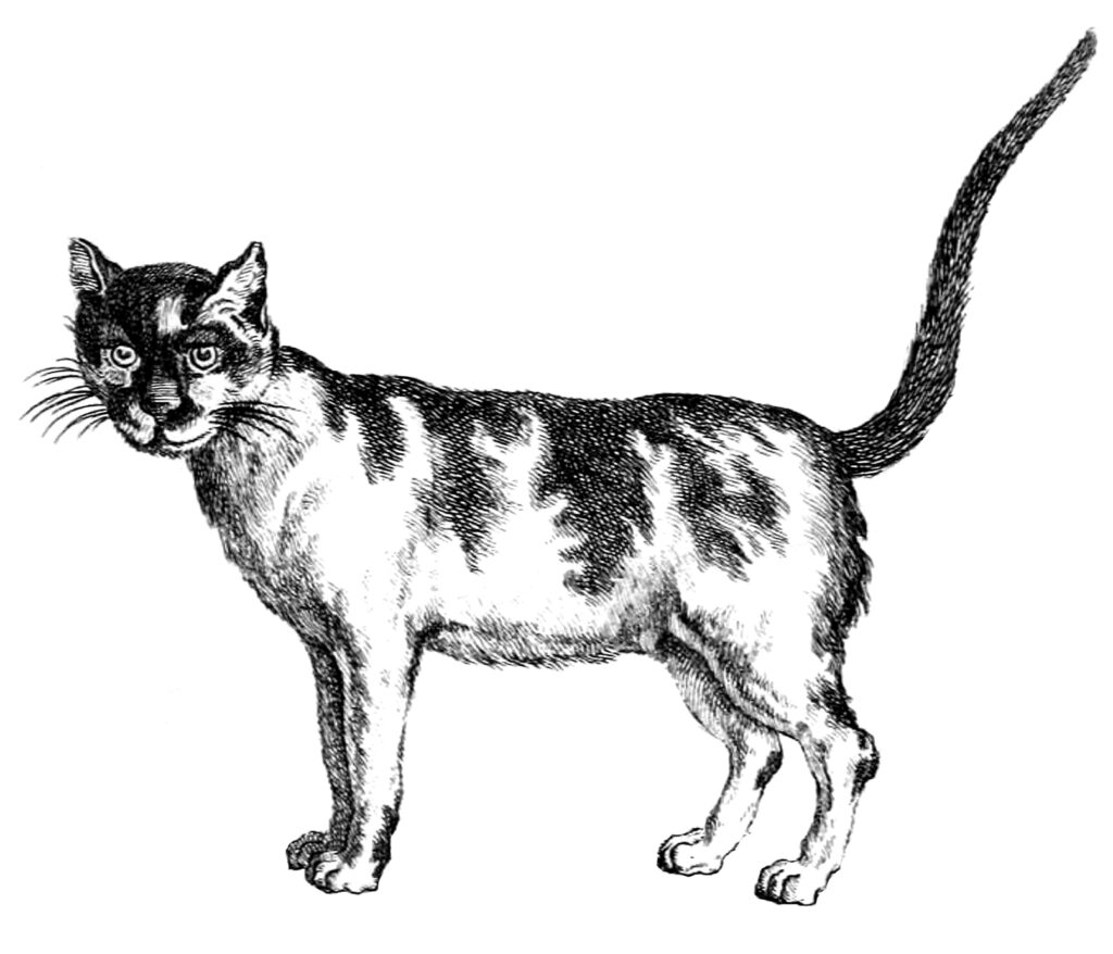 Early Cat Clipart