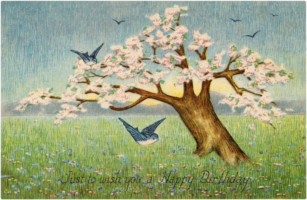 Happy Birthday Cherry Blossom Images