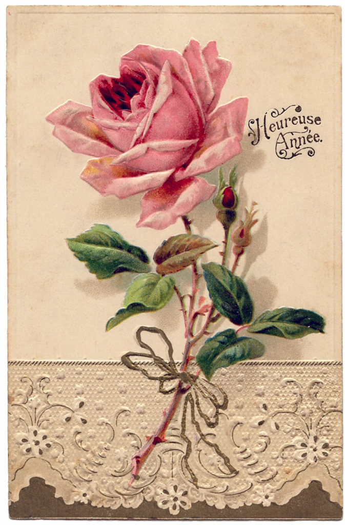 pink rose lace image