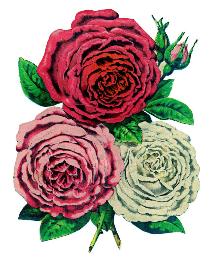 rose bouquet clipart