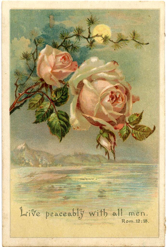 pink roses moon ocean image