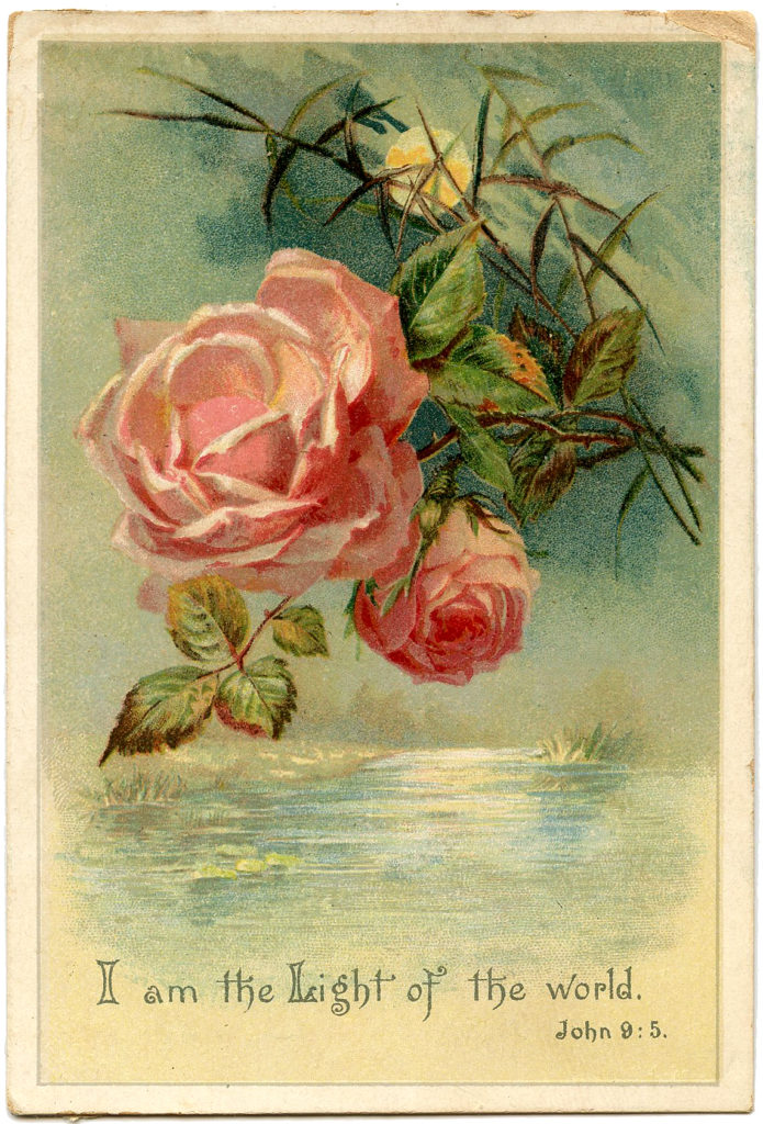 pink roses moonlight water image