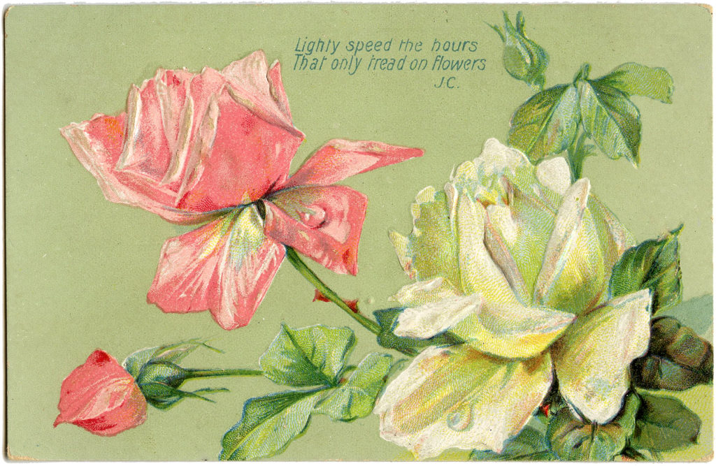 pink white roses vintage clipart