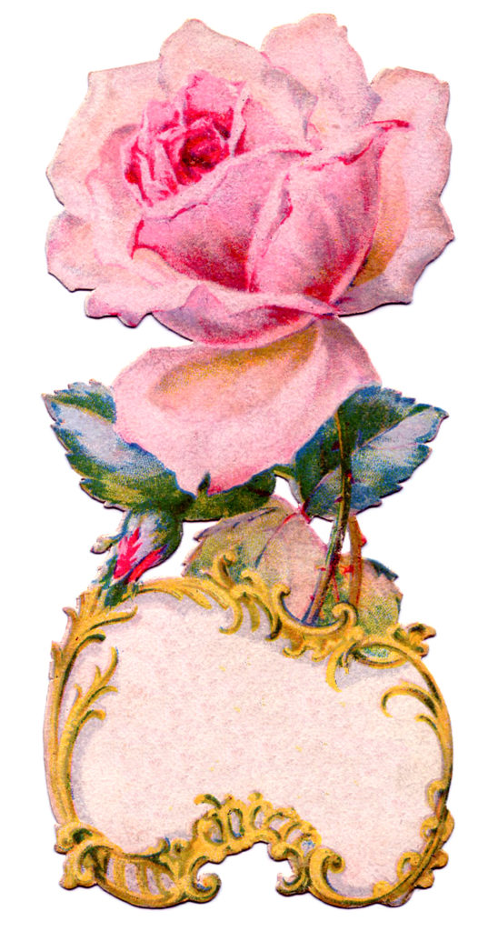 pink rose frame illustration