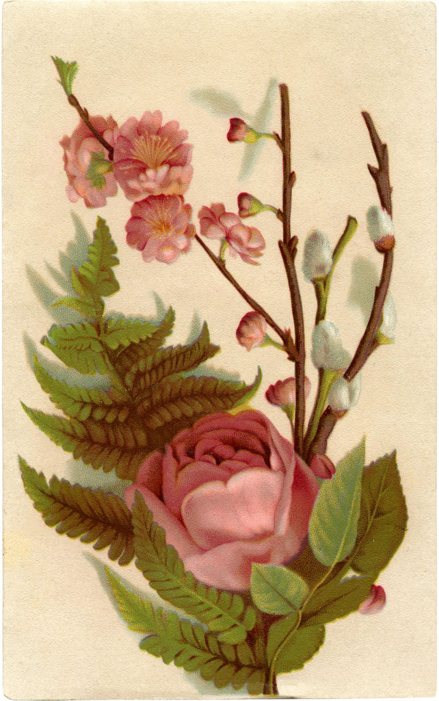 romantic pink roses fern pussy willow vintage illustration