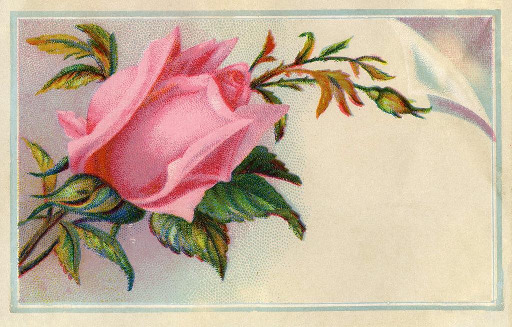 rose vintage calling card image