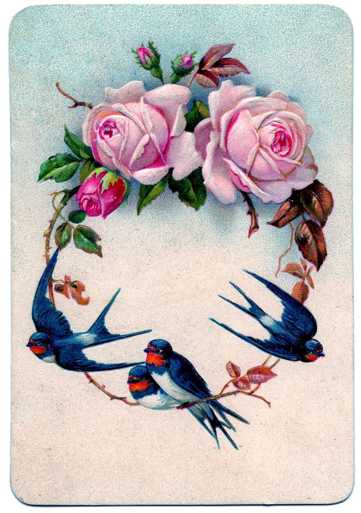 swallows pink roses vintage image