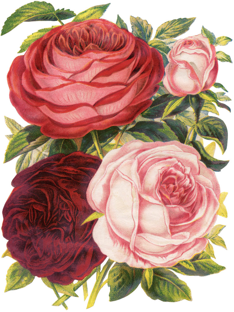 Victorian scrap roses pink red clipart