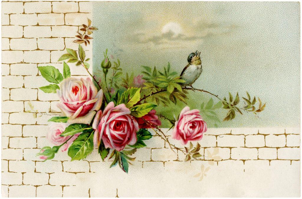 vintage roses brick wall bird image