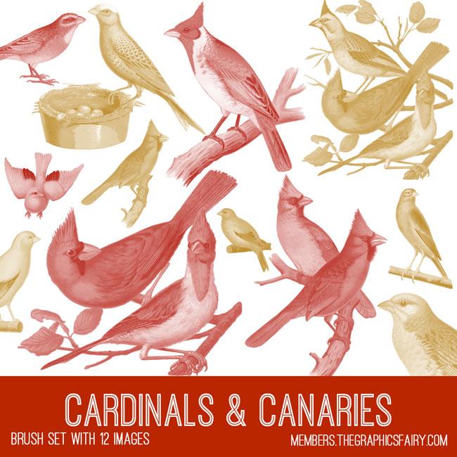 vintage cardinals & canaries ephemera brush set