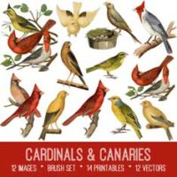 vintage cardinals & canaries ephemera bundle