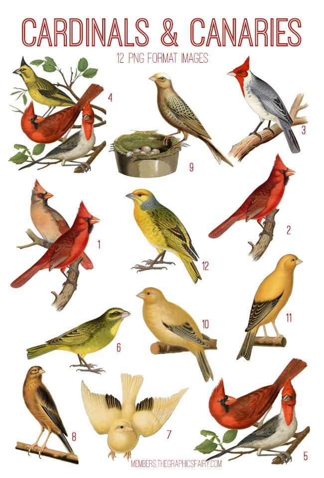 vintage cardinals & canaries ephemera digital image bundle