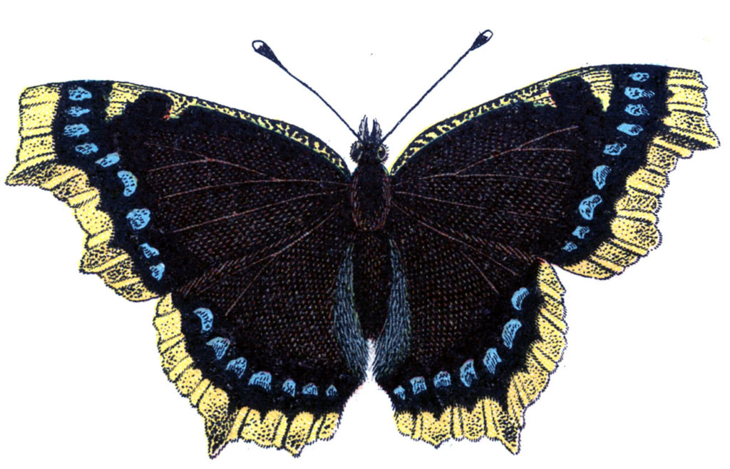 vintage butterfly blue yellow illustration
