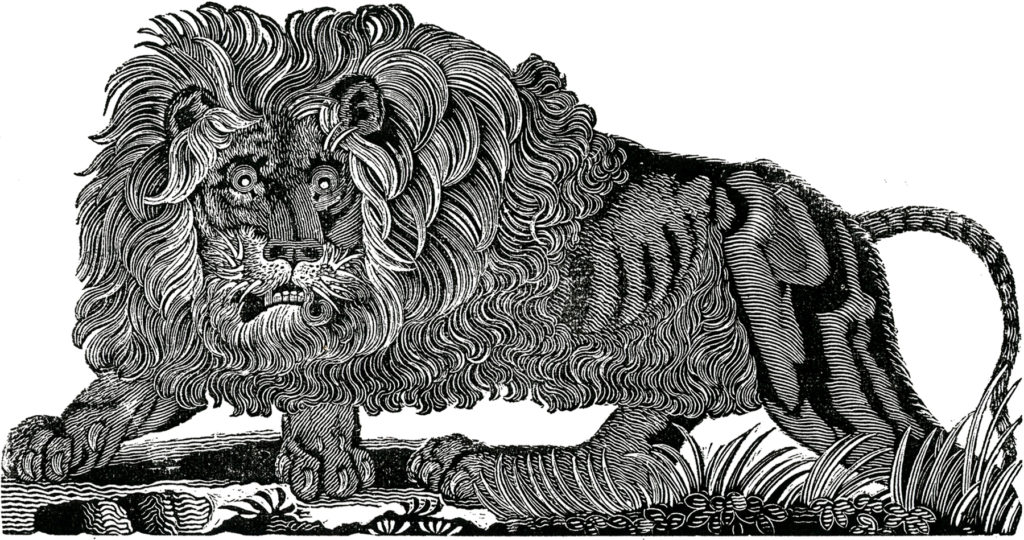 Lion Fierce black white clip art