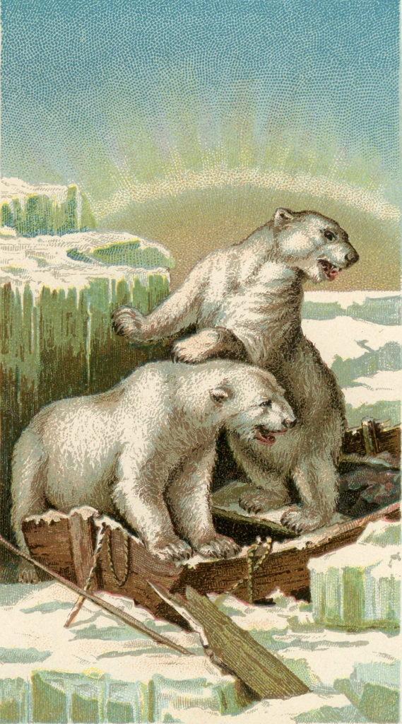 polar bears ice boat image