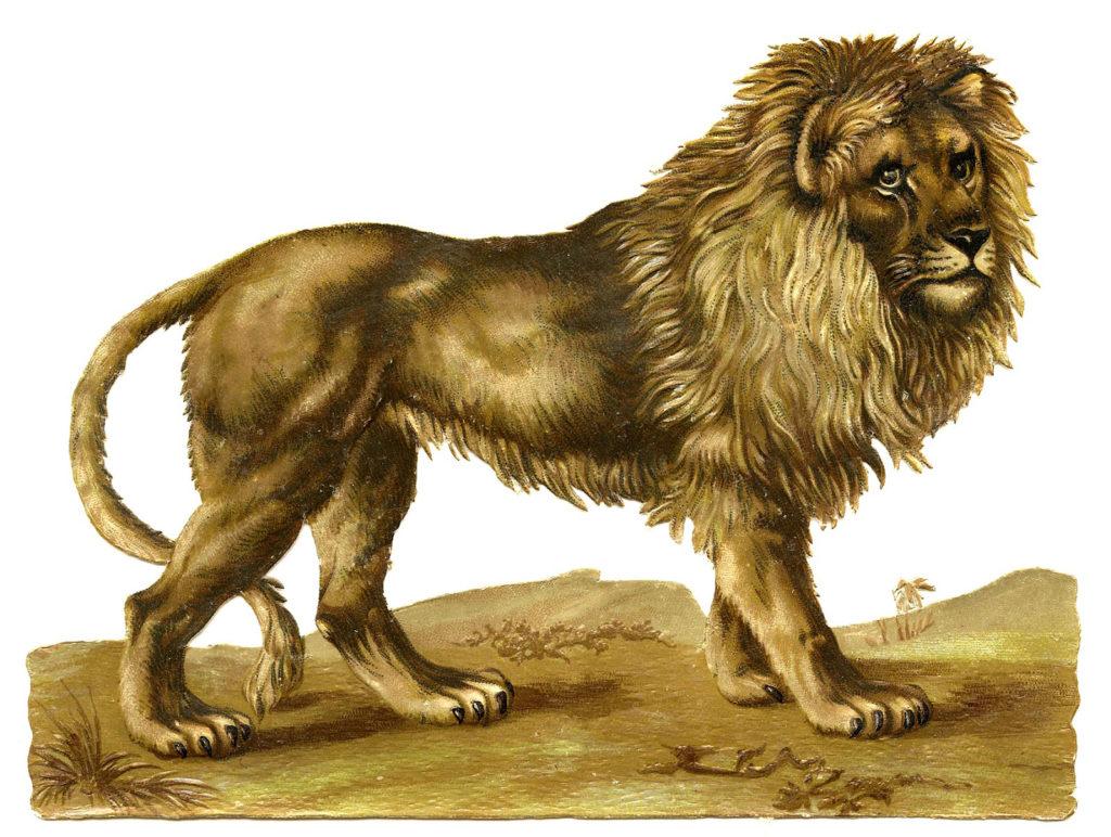 Lion Standing Mane Vintage Image