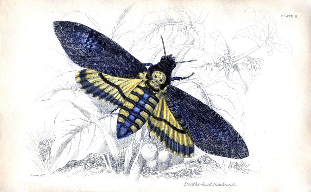 blue moth skull halloween image