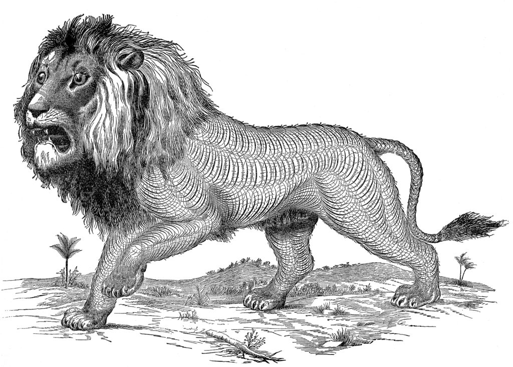 spencerian lion black white clipart