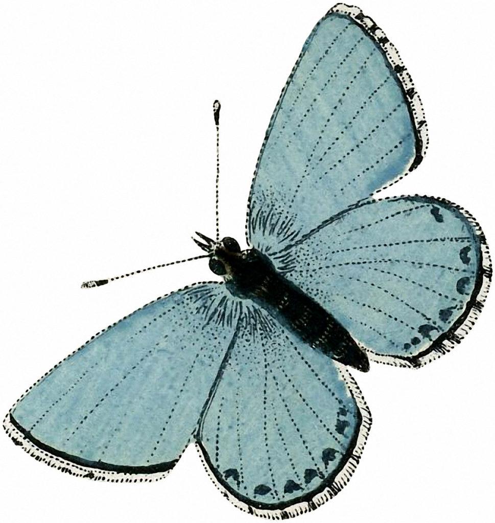 aqua blue vintage butterfly clipart