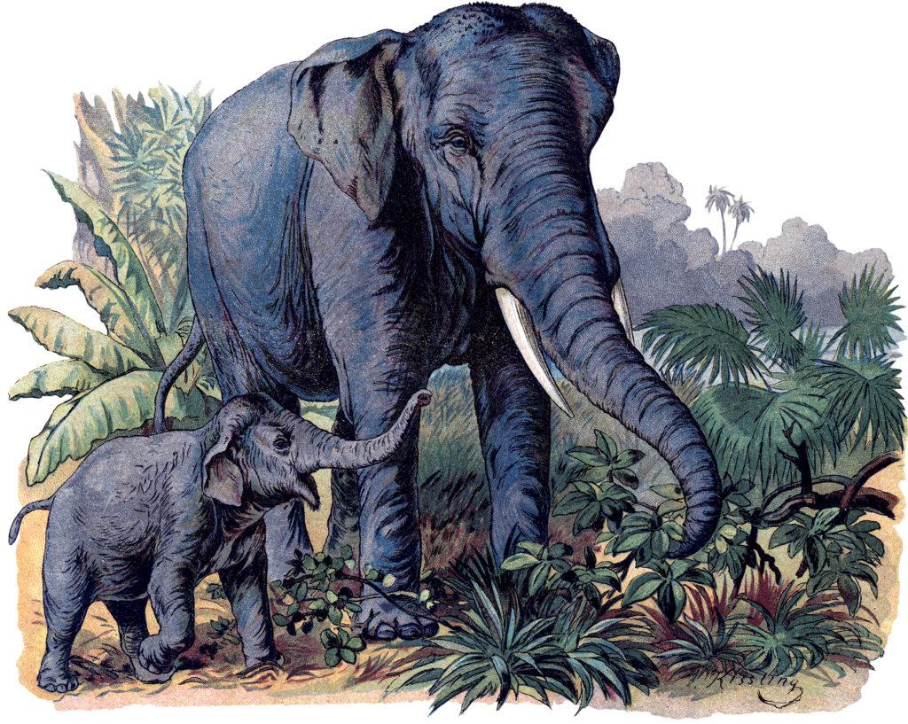wild elephants mother baby image