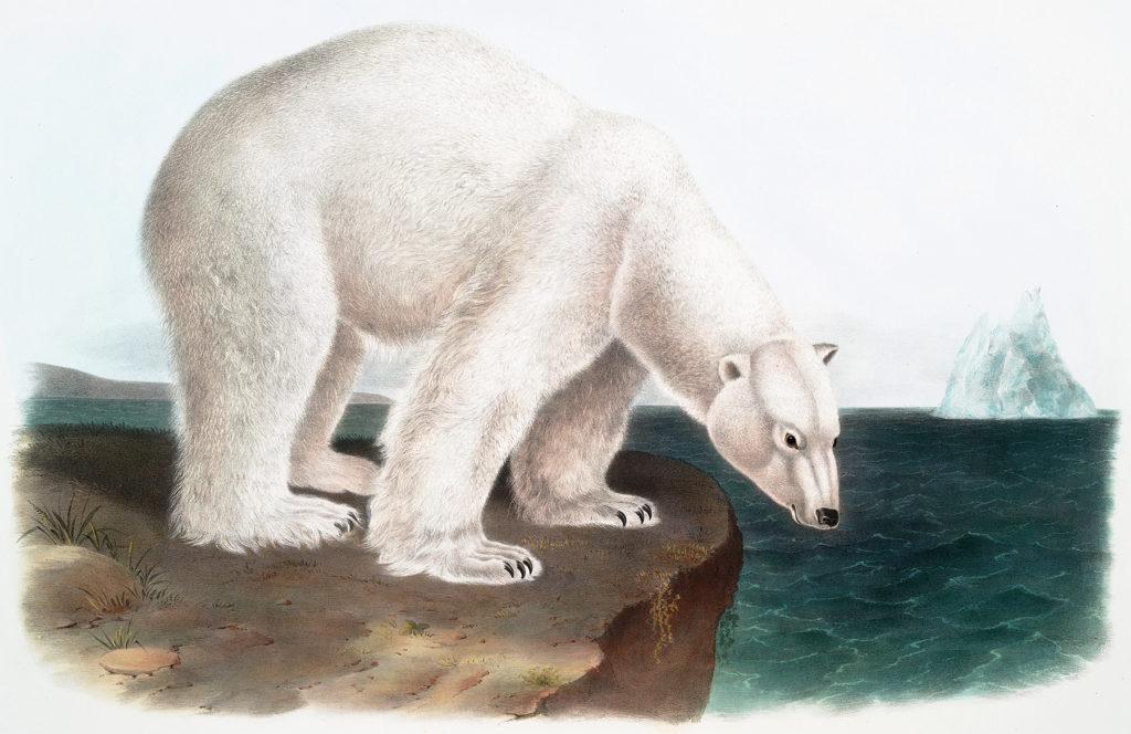 vintage polar bear clipart