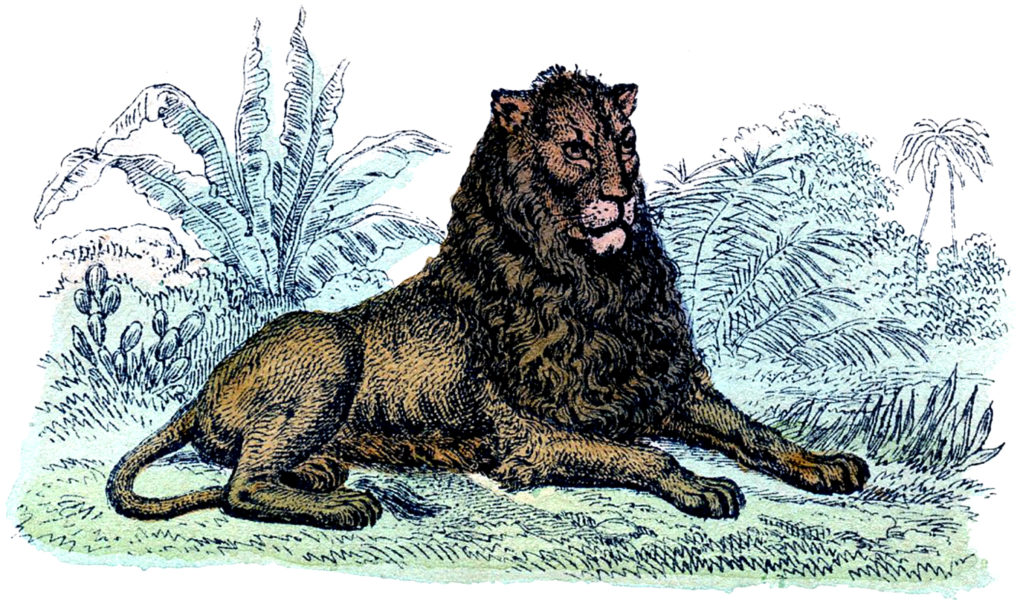 Vintage Lion Resting Illustration