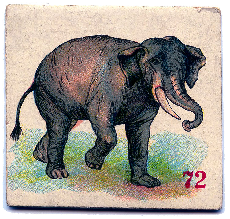 animal cards vintage elephant image