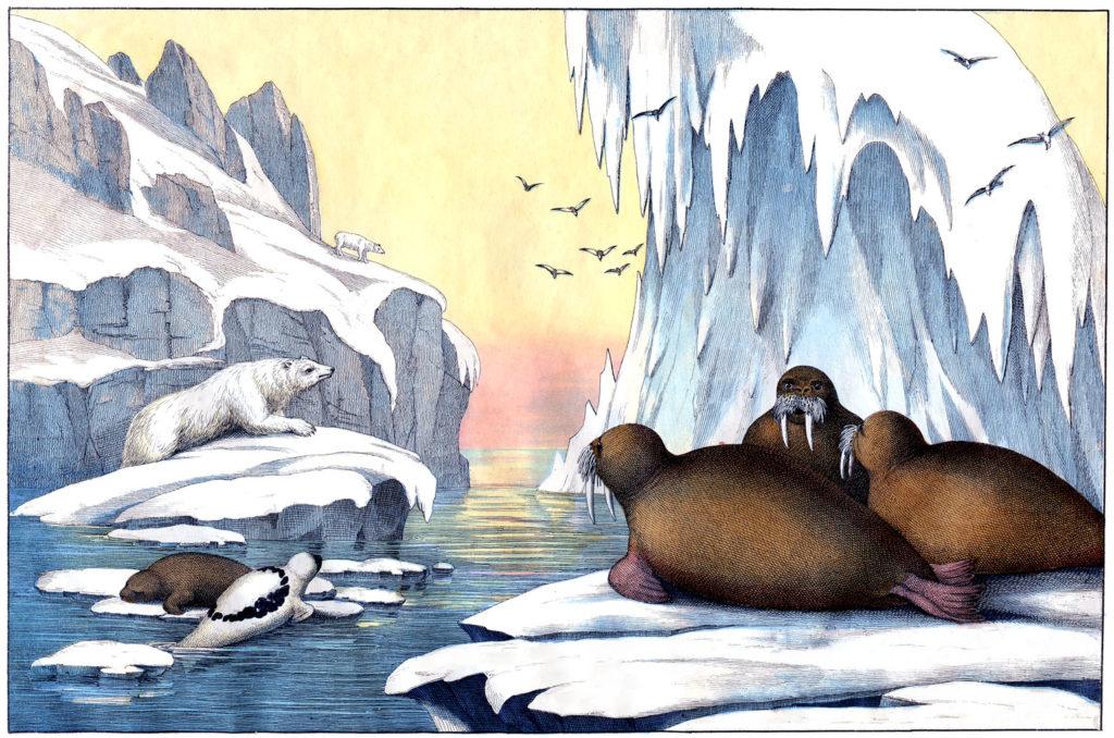polar bears seals iceberg illustration