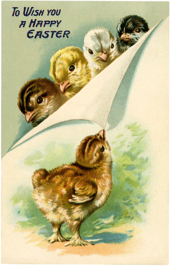 baby chicks vintage illustration
