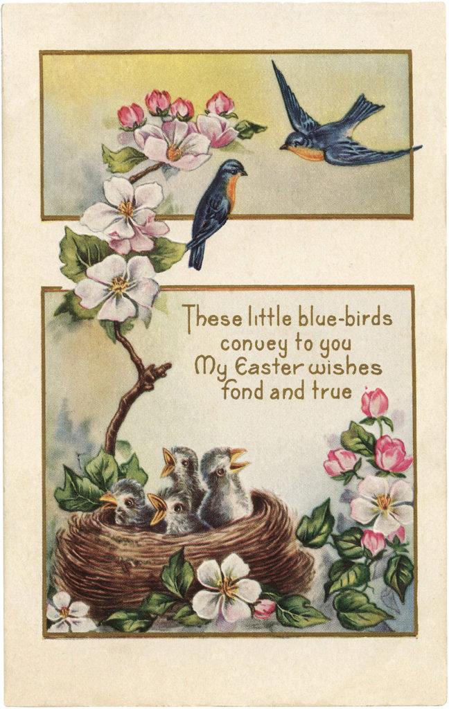 Easter Bluebirds nest dogwood flowers illustration