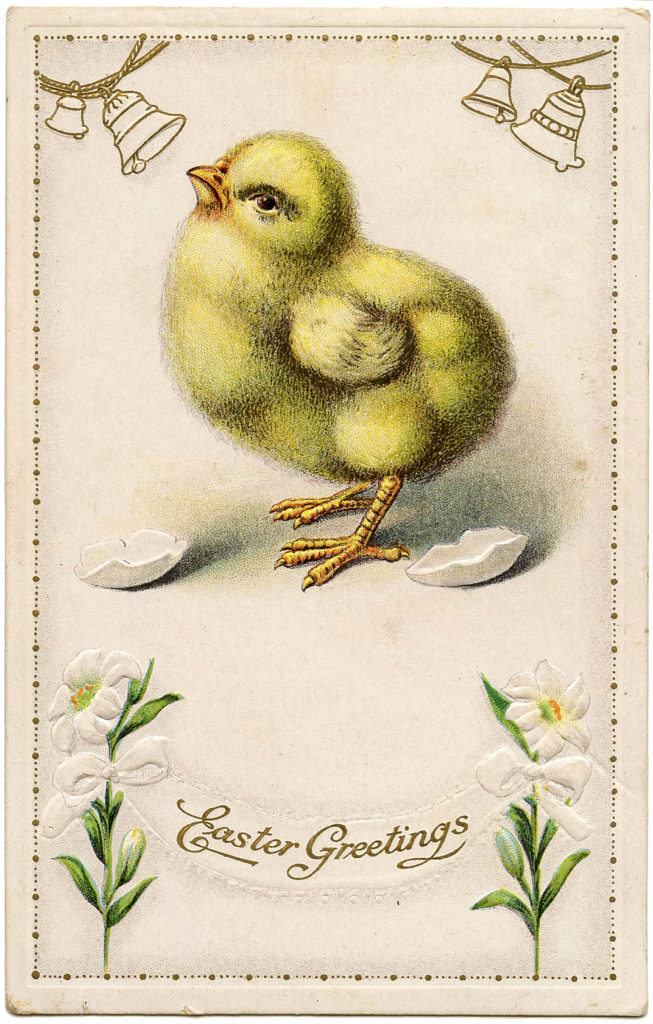 fluffy yellow chick clip art