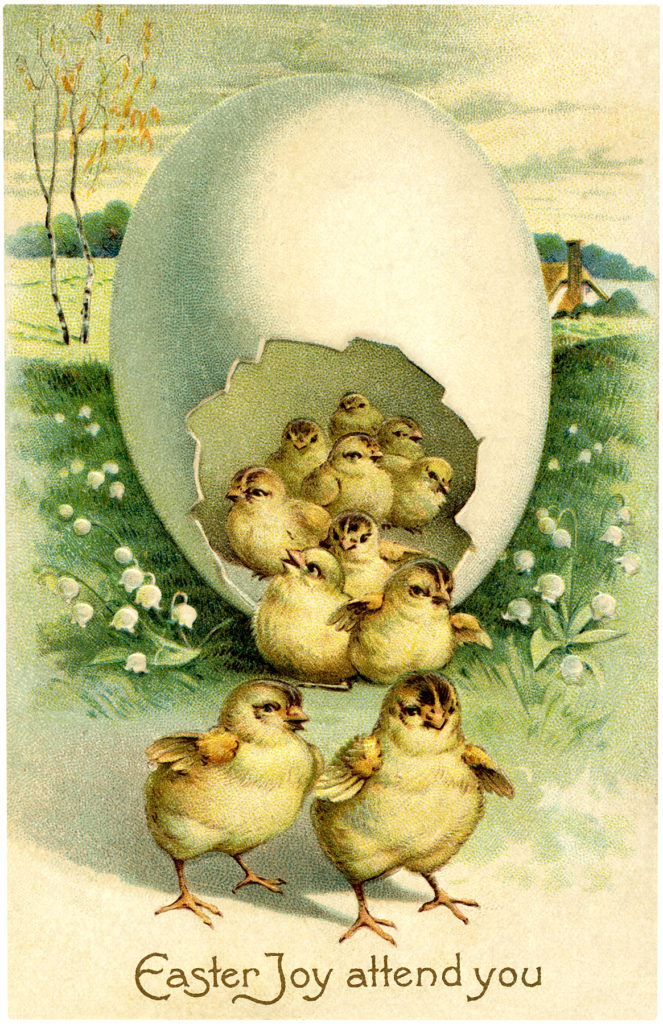 Egg chicks hatching image