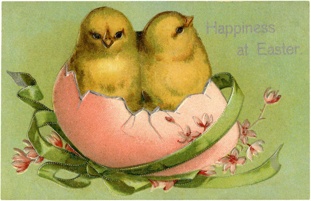Easter chicks hatching image