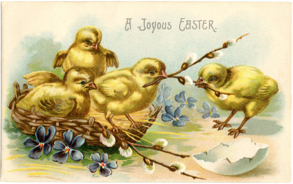 Easter chicks pussy willow illustration
