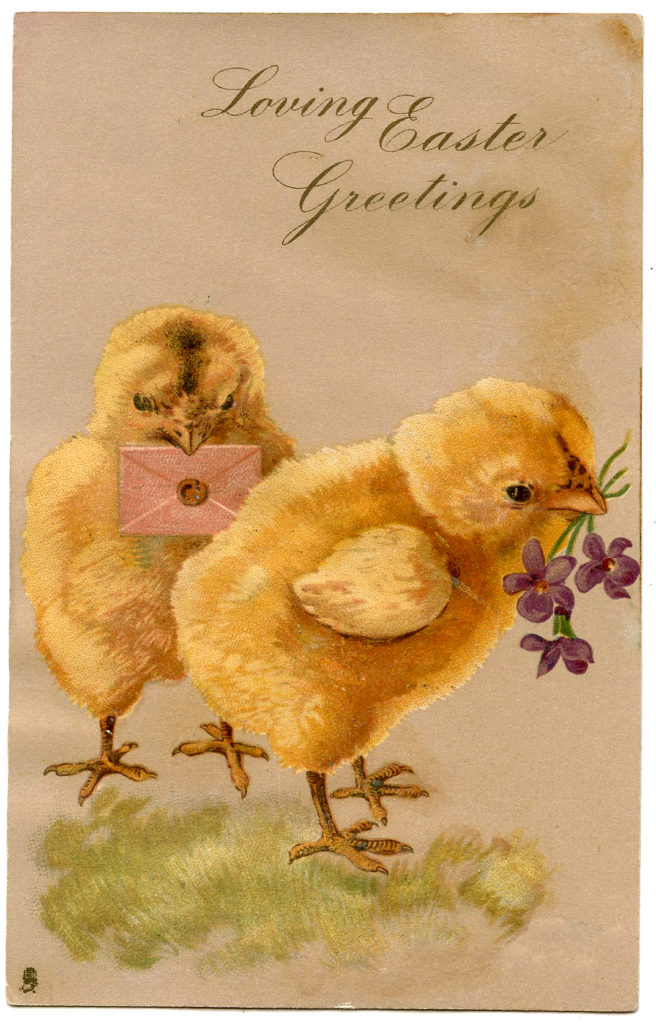 Easter chicks violets mail image