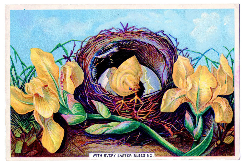 easter peeps nest flowers illustration