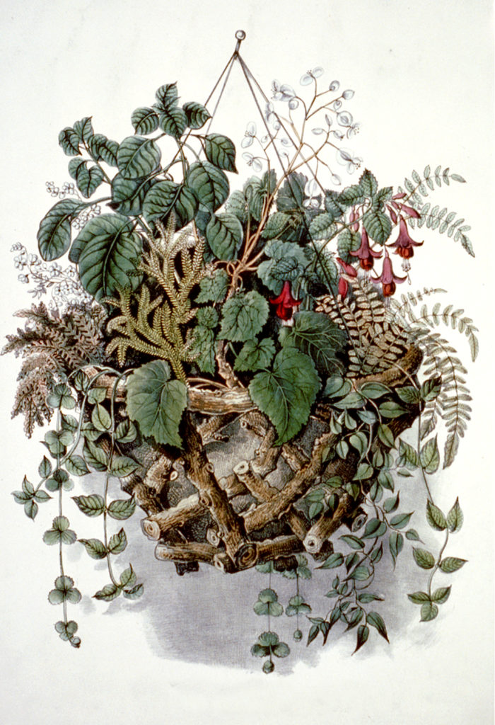 hanging plant basket illustration