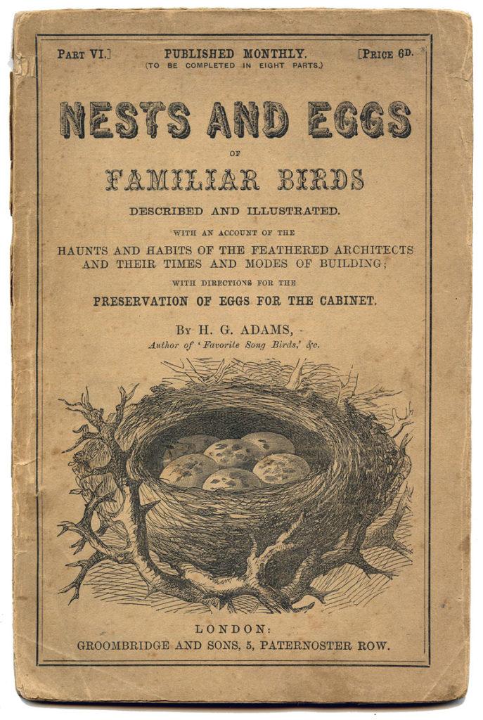 nest eggs ephemera clipart