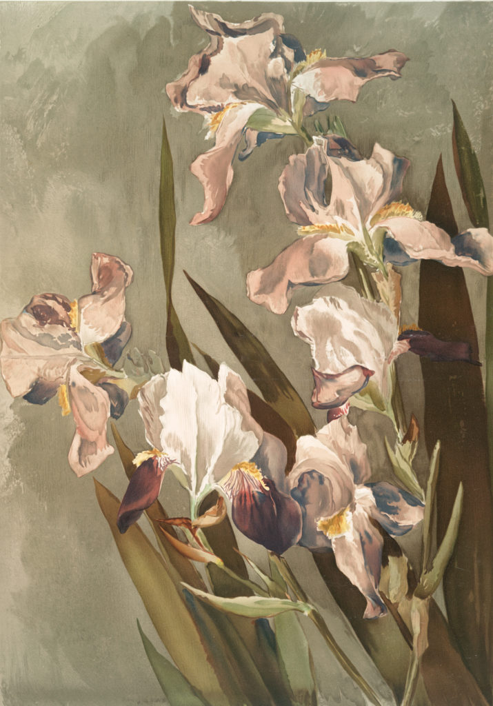 Pink Iris Image