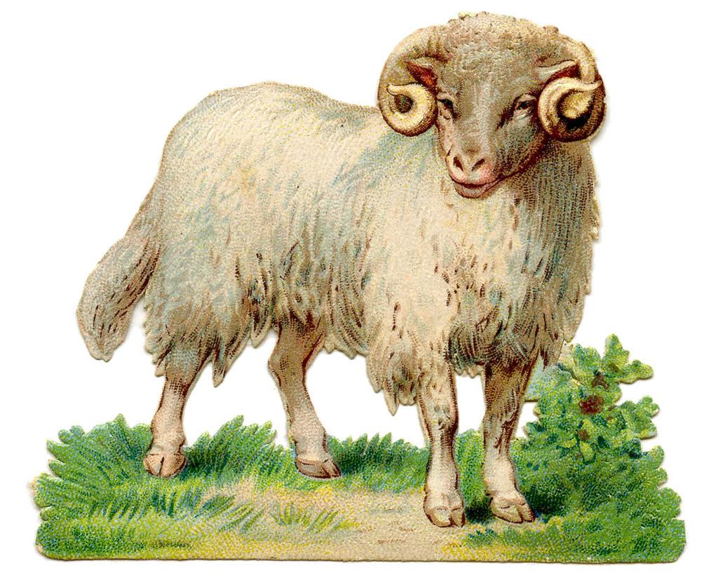 Vintage Ram Image