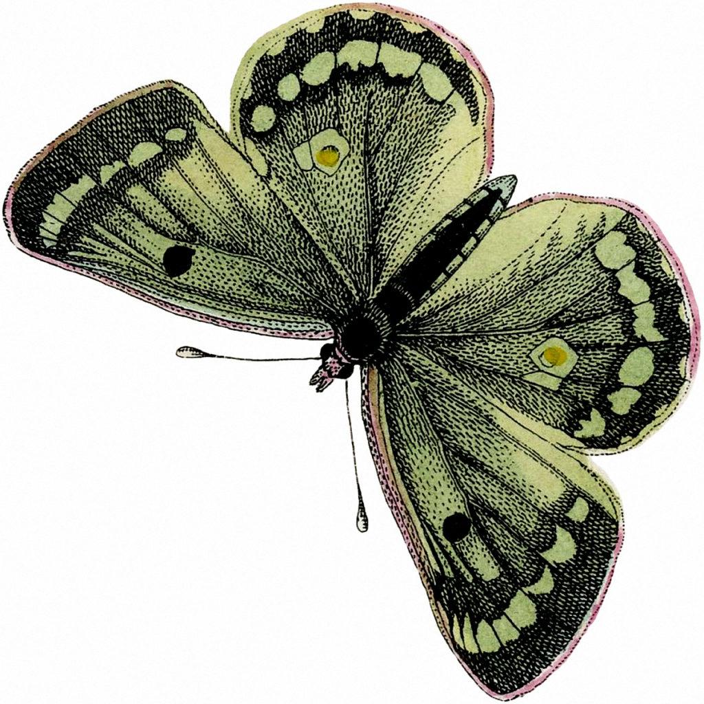 Vintage Green Butterfly Clip Art