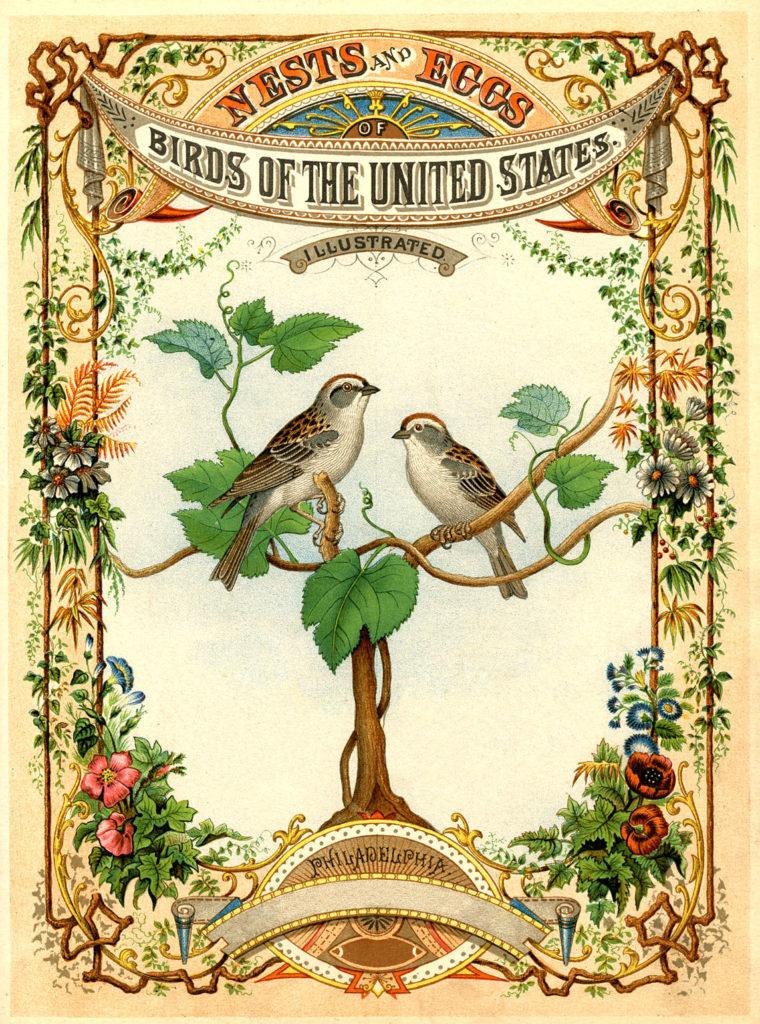 birds nests vintage title page image