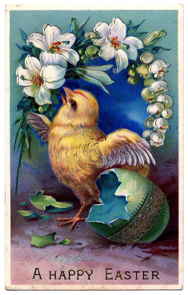 easter chick eggshell lily illustration