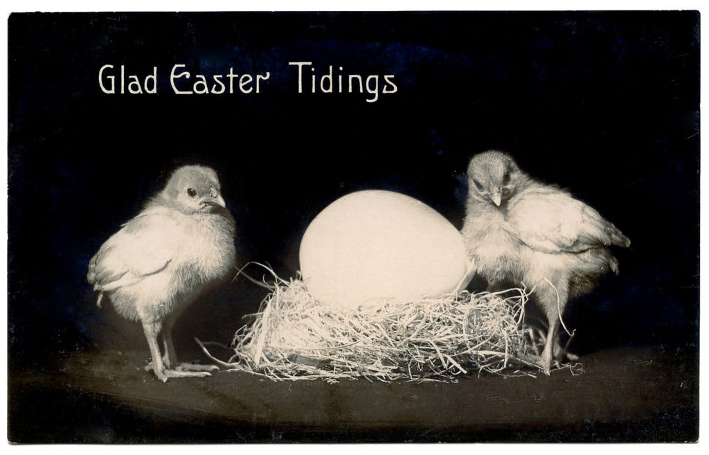 black white vintage photograph chicks egg clipart