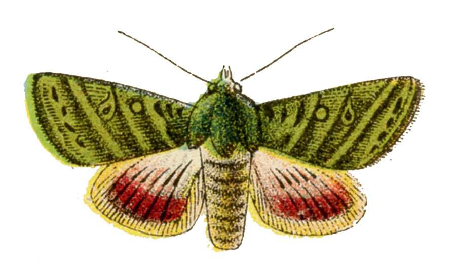Vintage Green Moth Imae