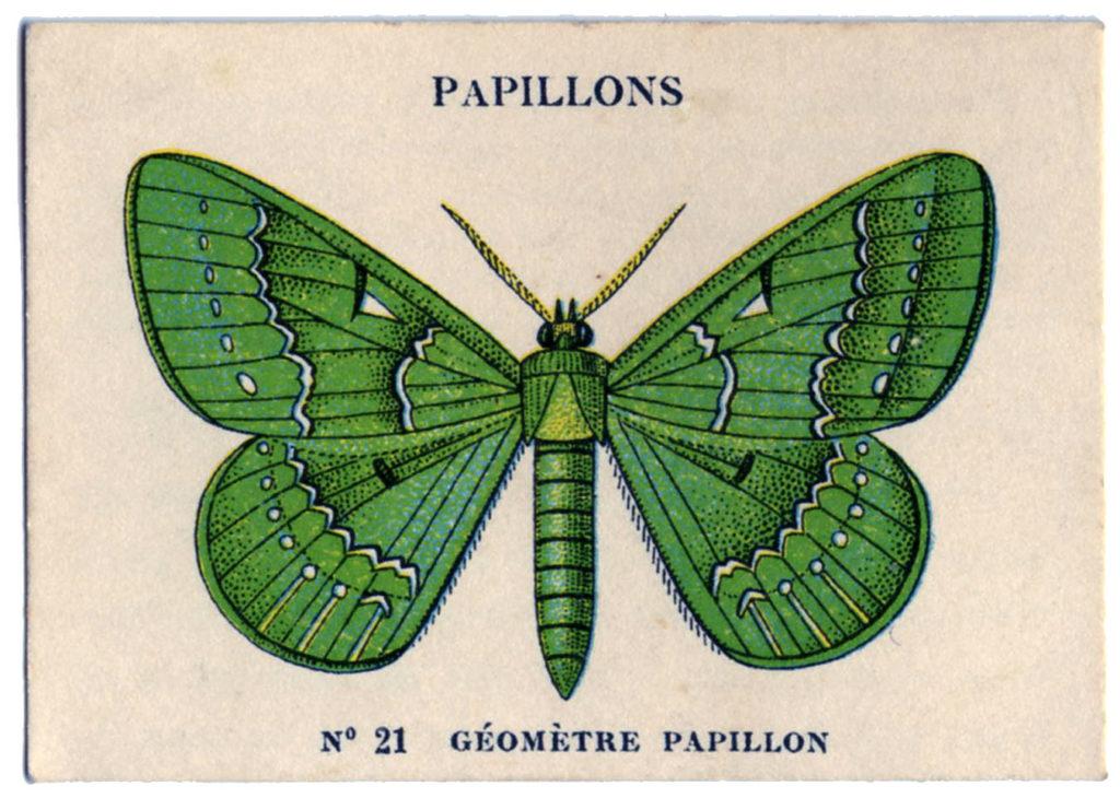Vintage Green Moth Image