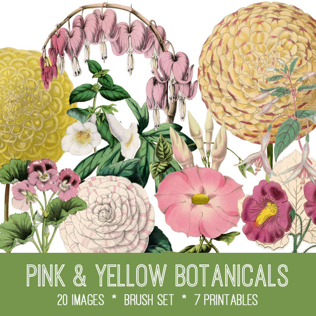 yellow pink botanicals ephemera vintage images