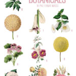 vintage yellow pink botanicals ephemera digital image bundle